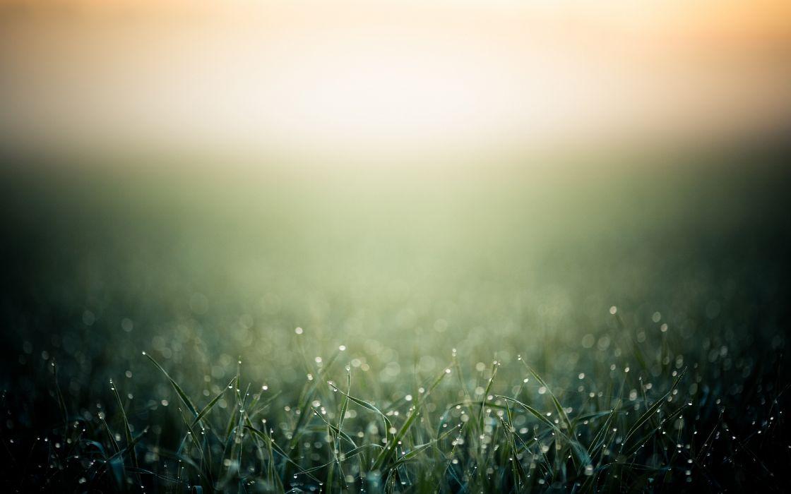 Morning dew over grass wallpaper