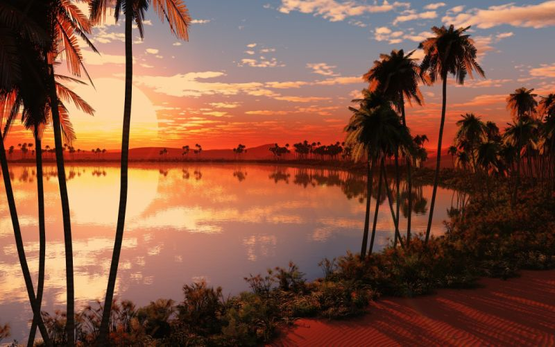 Sunset oasis wallpaper