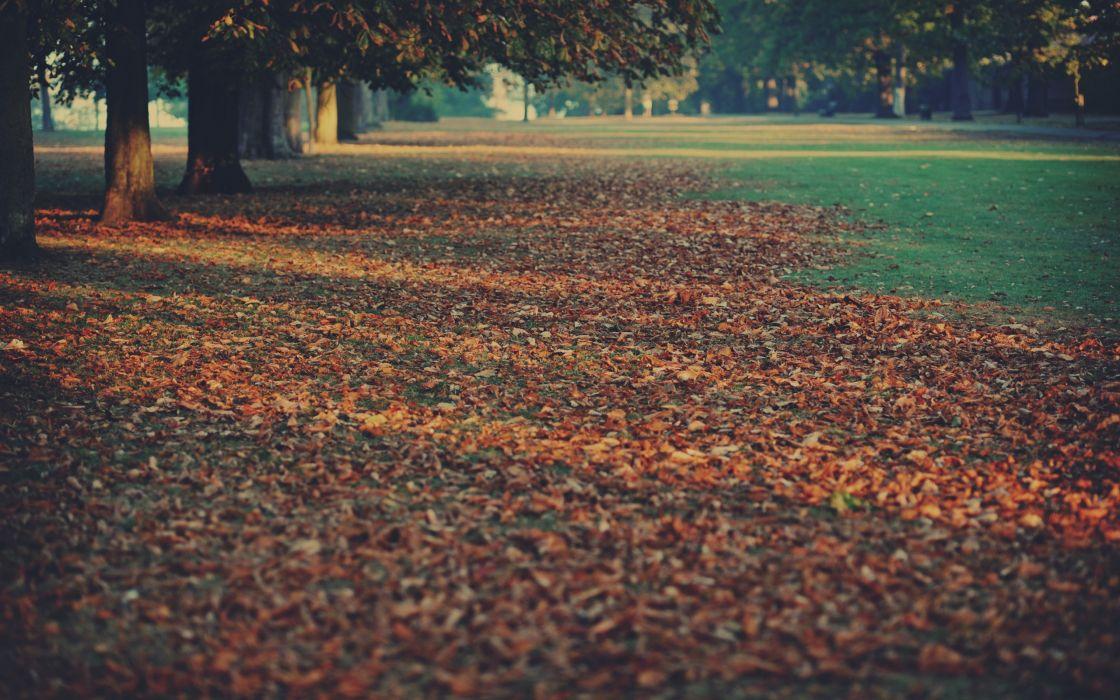 The park of fallen leaves wallpaper