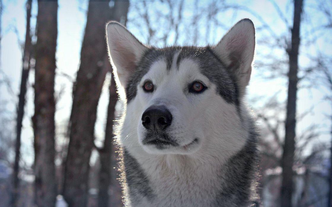 Dog at winter wallpaper