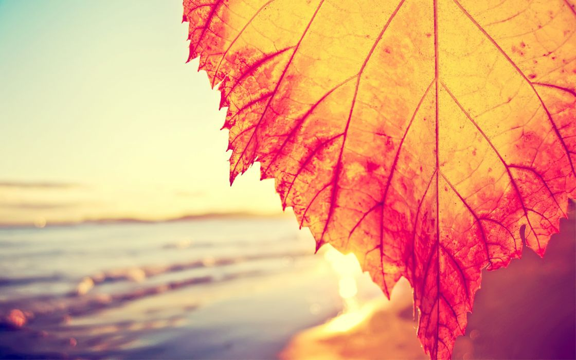 Autumnal leaf covering the beach wallpaper