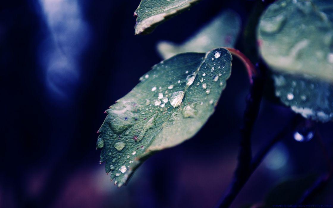 Fall rain of nature wallpaper