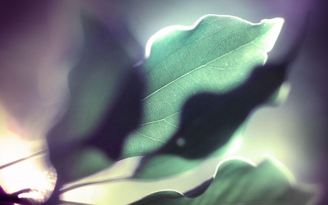 Curly leaf wallpaper