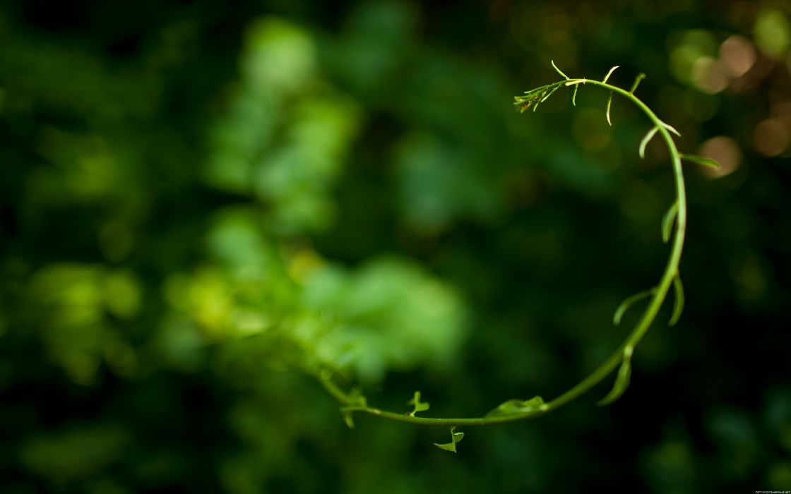 Curved plant wallpaper