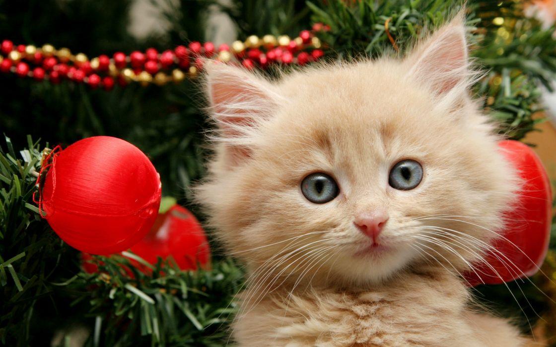 Merry Christmas kitten wallpaper
