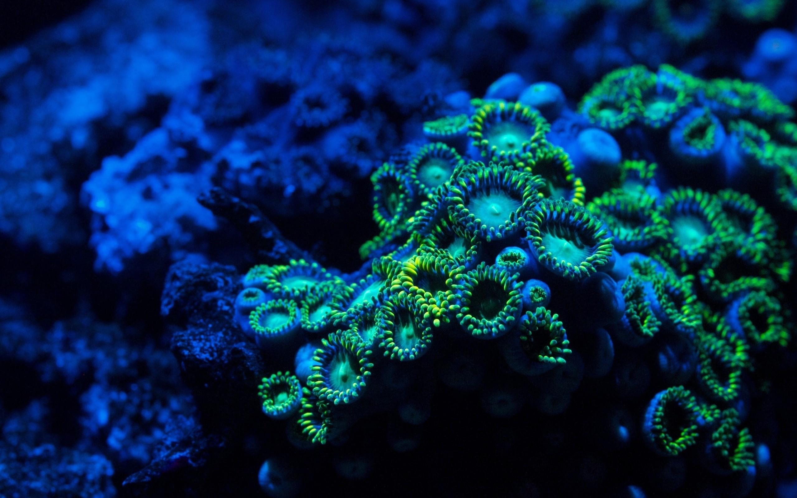 Underwater plants wallpaper | 2560x1600 | 2853 | WallpaperUP
