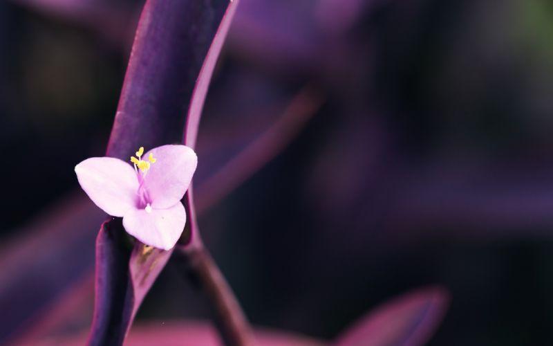 Minimal pink flower wallpaper