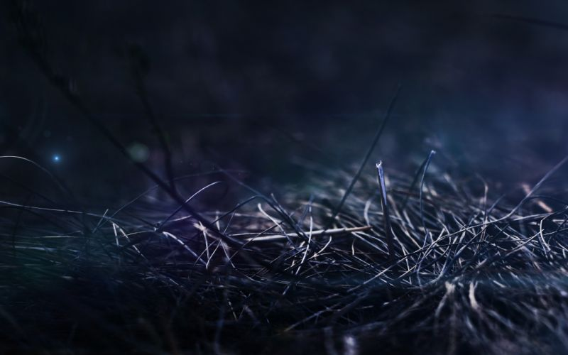 Grass at night wallpaper