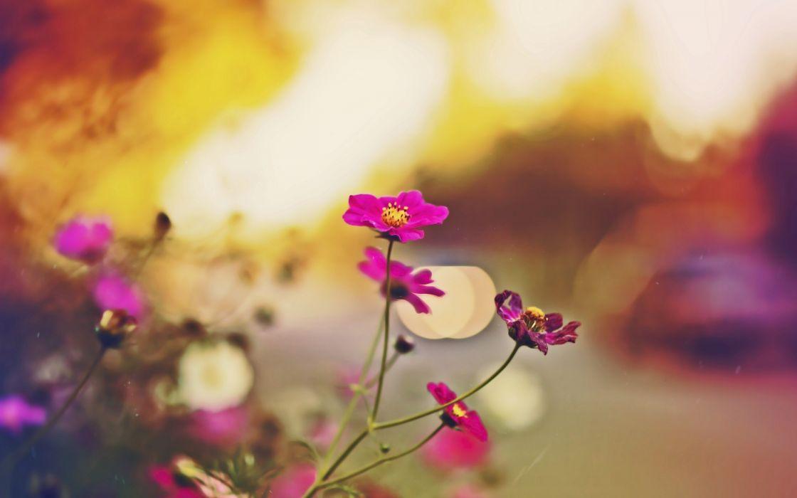 Summer purple flowers wallpaper