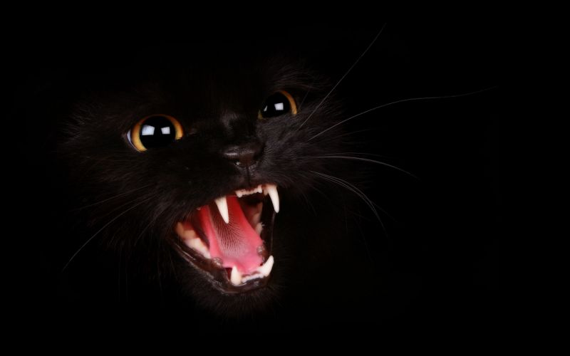 Aggressive black cat wallpaper