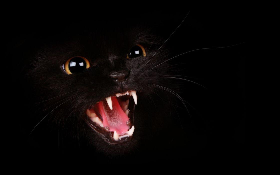 Aggressive black cat wallpaper