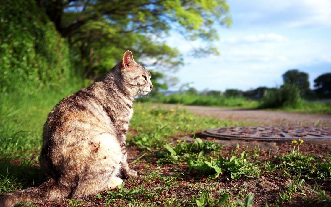 Cat in the field wallpaper