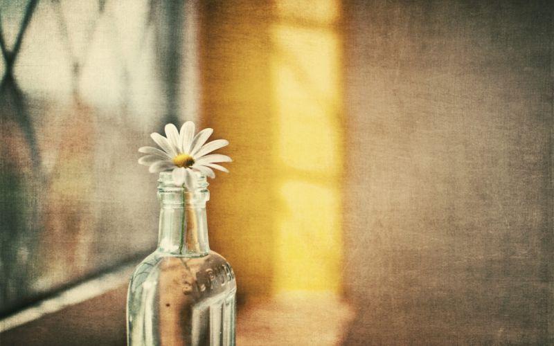 Flower in a bottle wallpaper