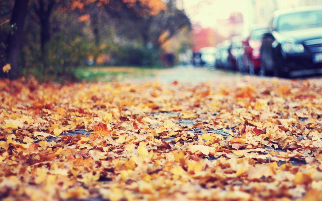 Fallen leaves on the sidewalk wallpaper