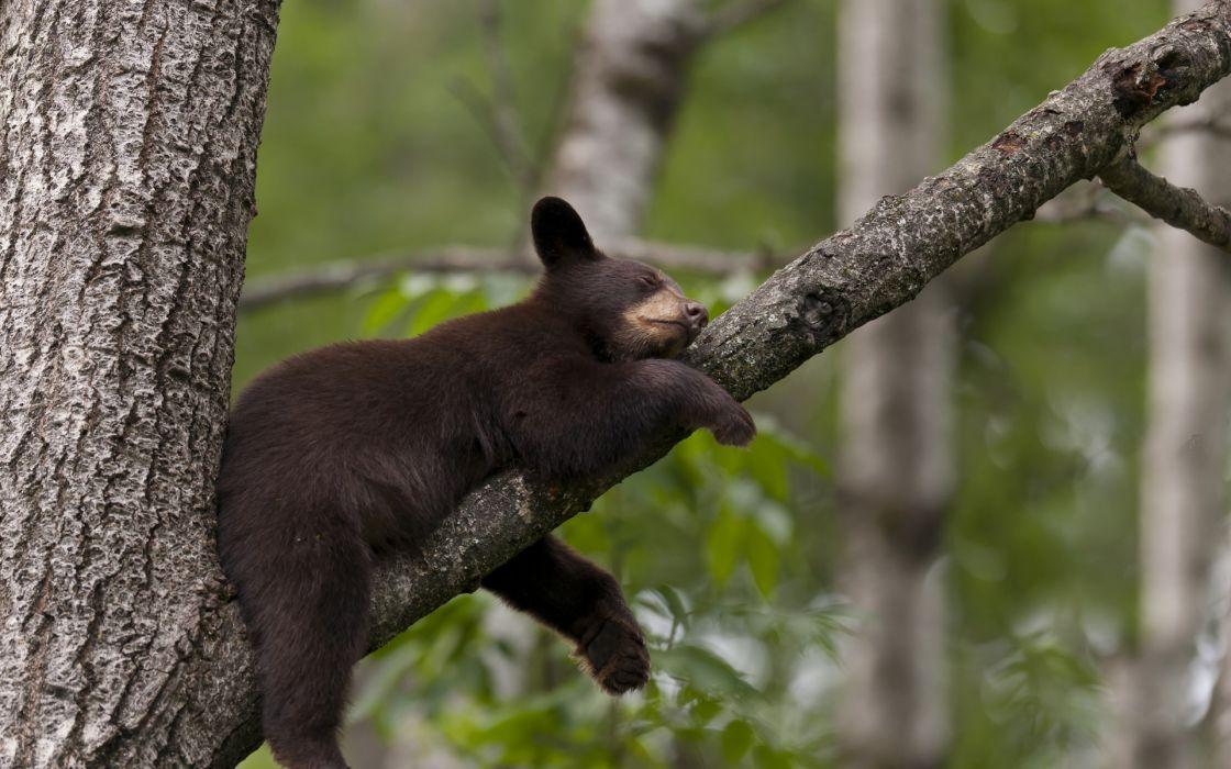 Little bear sleeping wallpaper