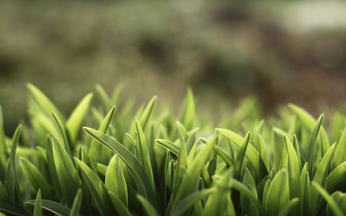 Macro grass wallpaper