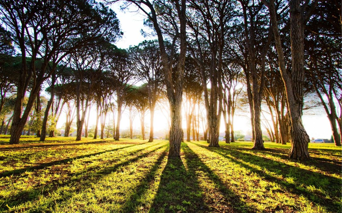 The long shadows of trees wallpaper