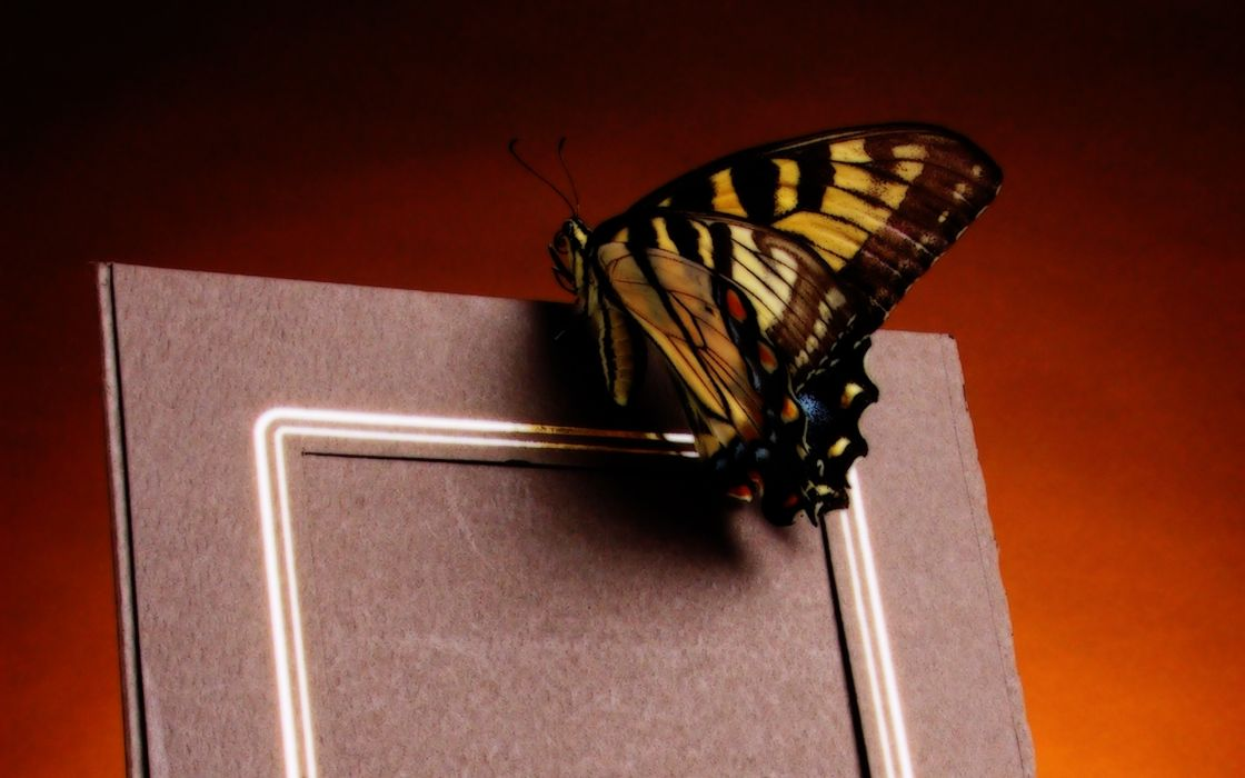 A butterfly landing on a photo frame wallpaper