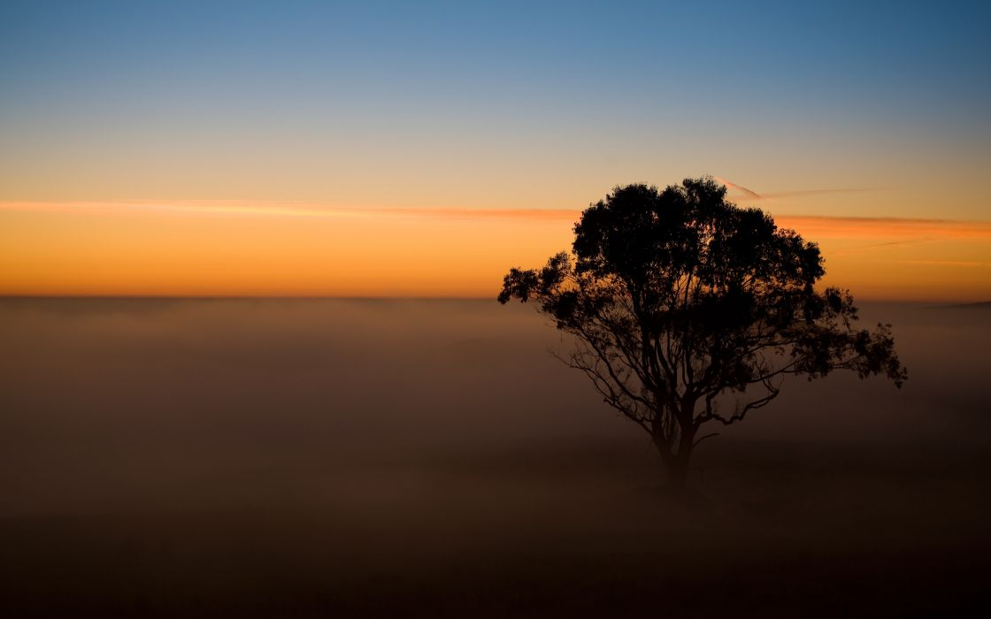Tree in the mist wallpaper