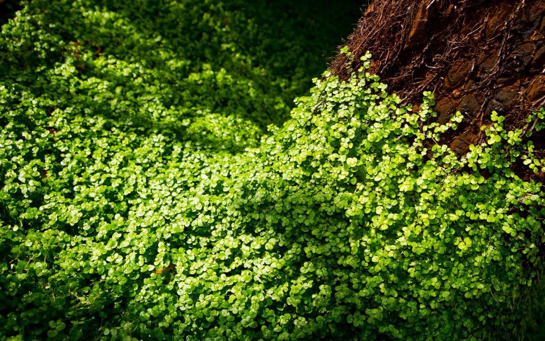 Forest plants wallpaper