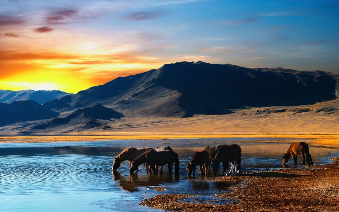 Herd of horses in mongolian wilderness wallpaper