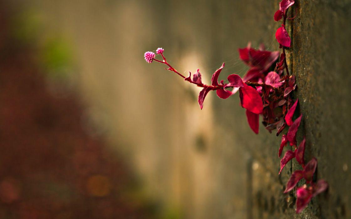 Red branch wallpaper