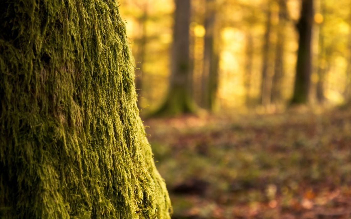 Moss covering the tree wallpaper