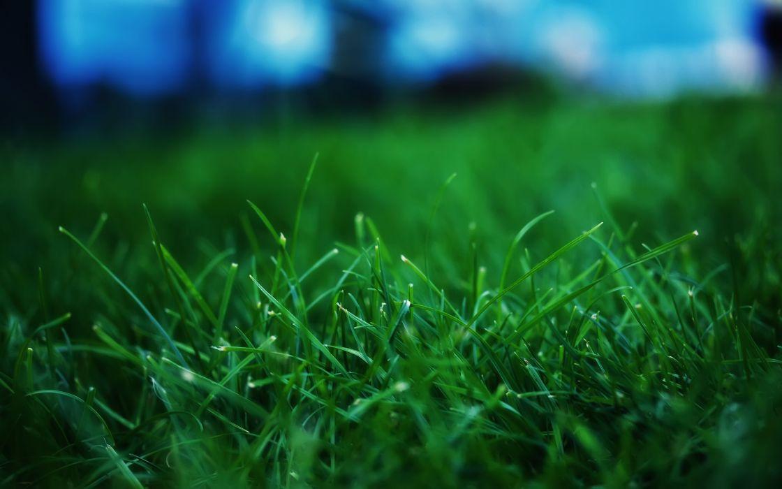 Fresh Grass wallpaper