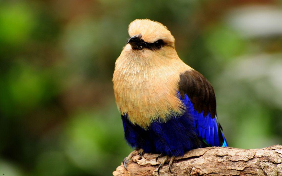 Bright bird wallpaper
