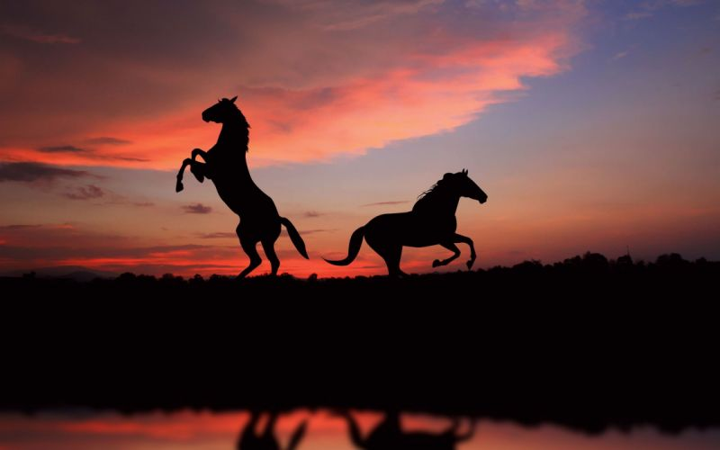 Horses In The Shade wallpaper
