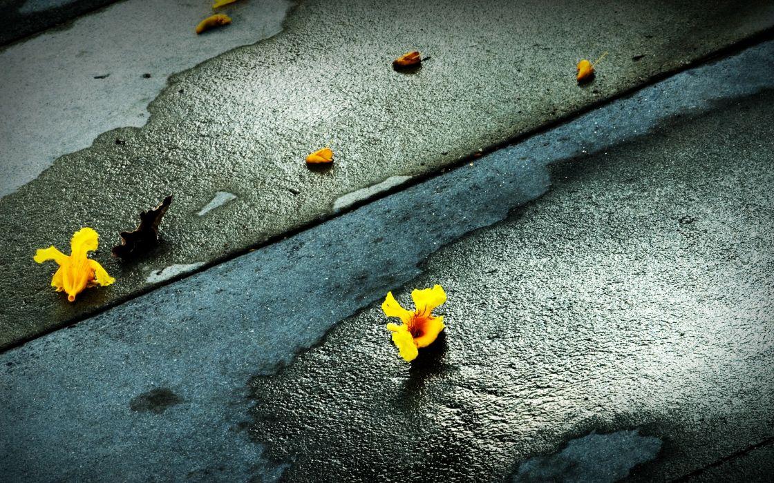 Sprinkled Flowers wallpaper
