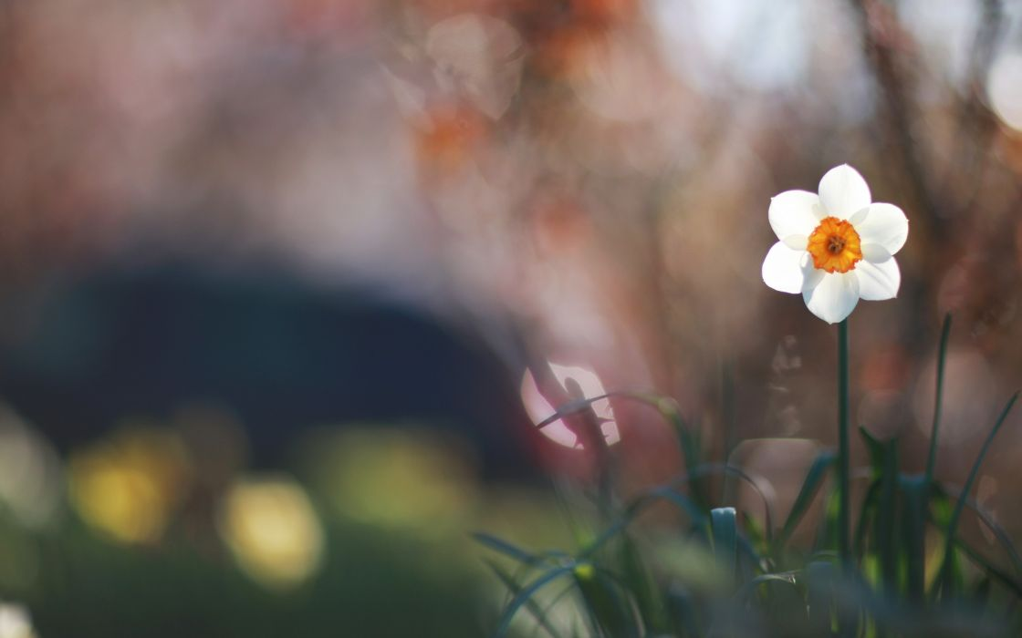 Cute daffodil in the grass wallpaper