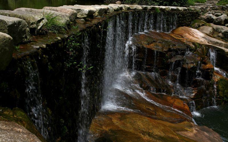 Forest falls wallpaper