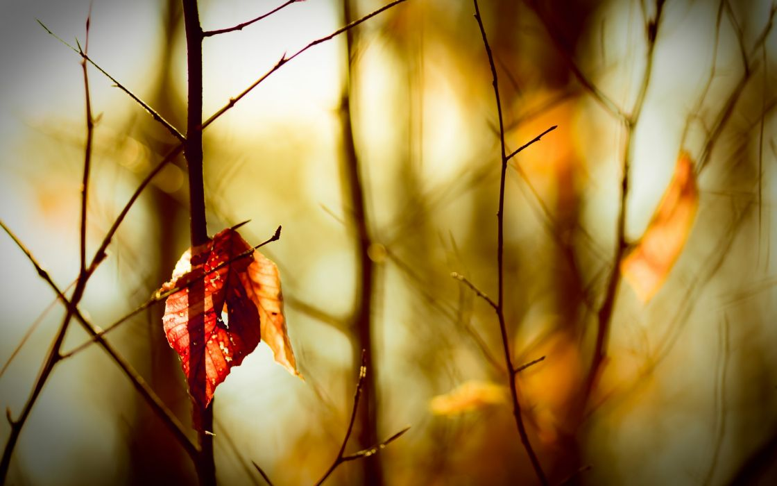 Autumn Loneliness wallpaper