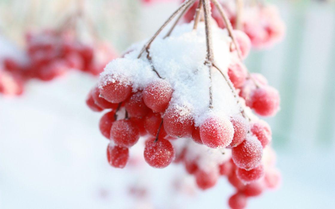 Frozen berries wallpaper