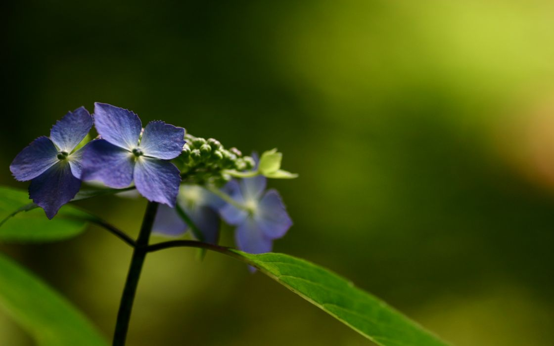 Beautiful blue flower wallpaper