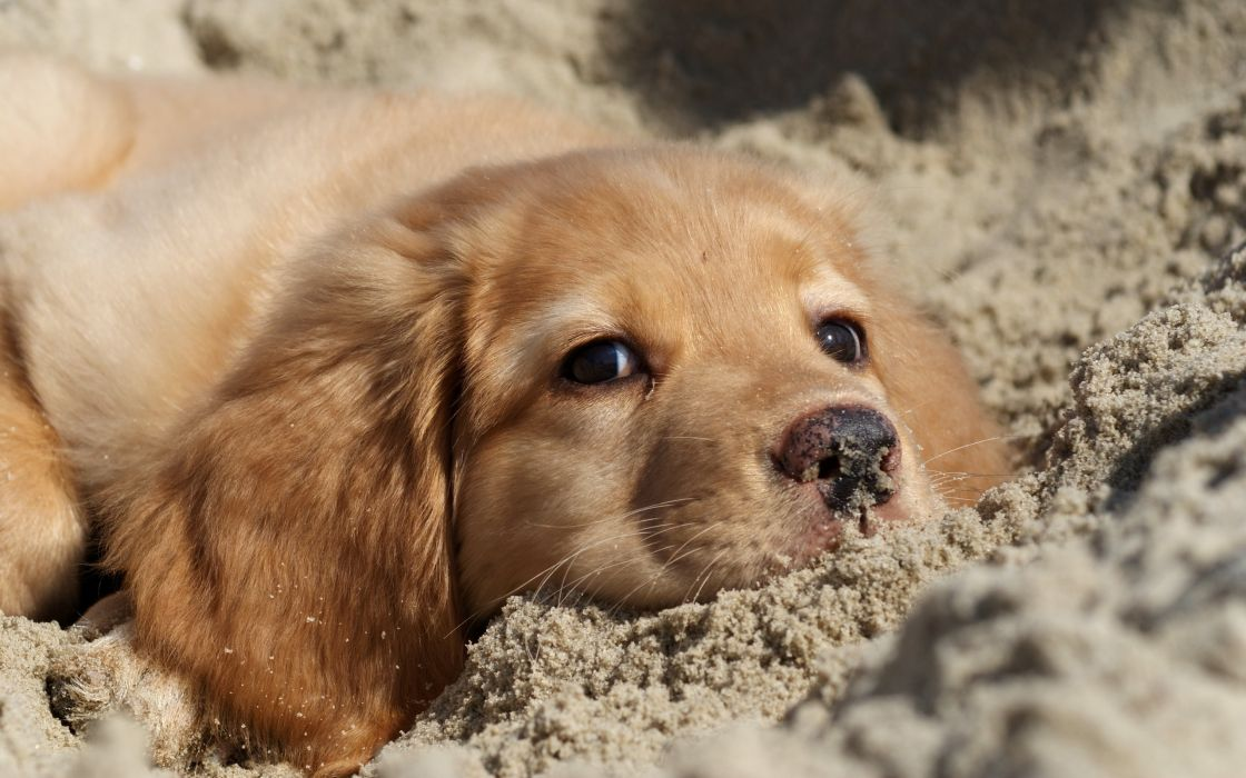 Dog and sand wallpaper