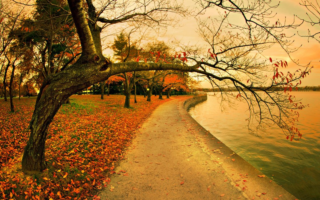 Fall In The Park wallpaper