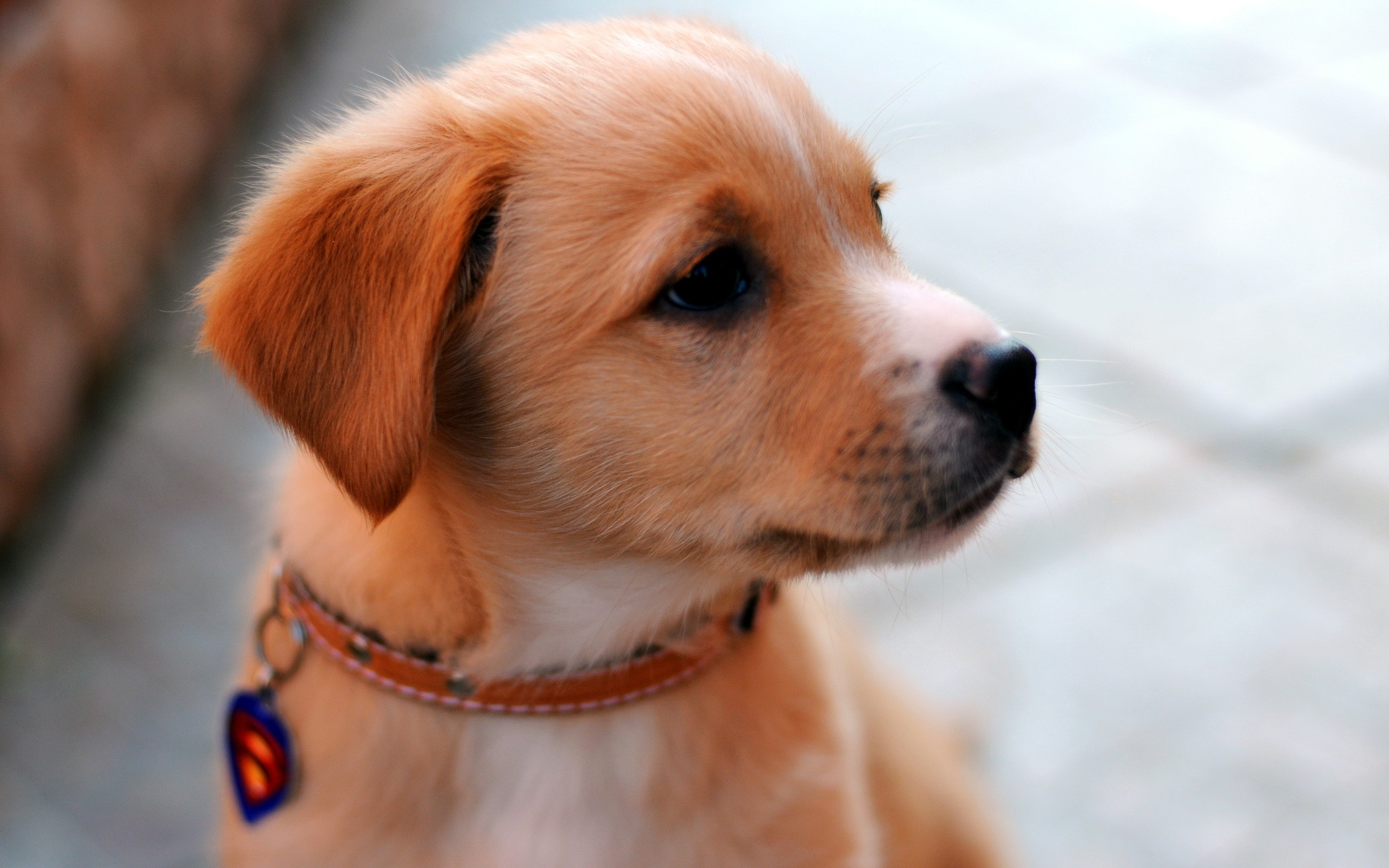 Cute puppy with sensitive eyes wallpaper