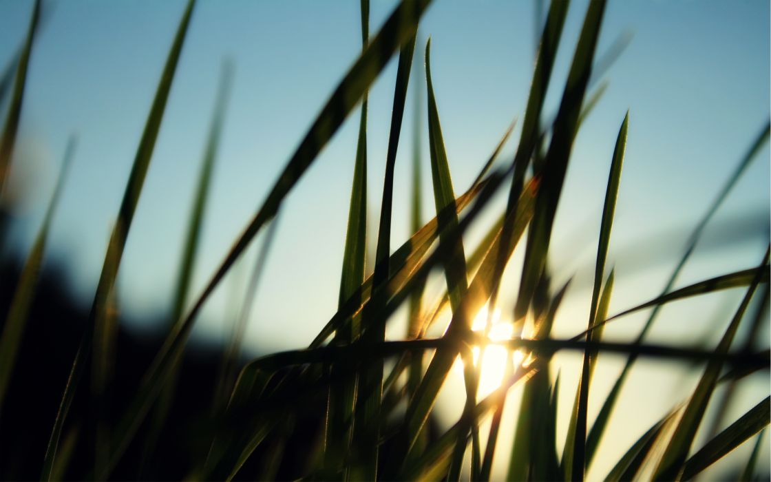 Grass and sun wallpaper