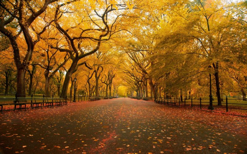 Central Park the mall fall wallpaper
