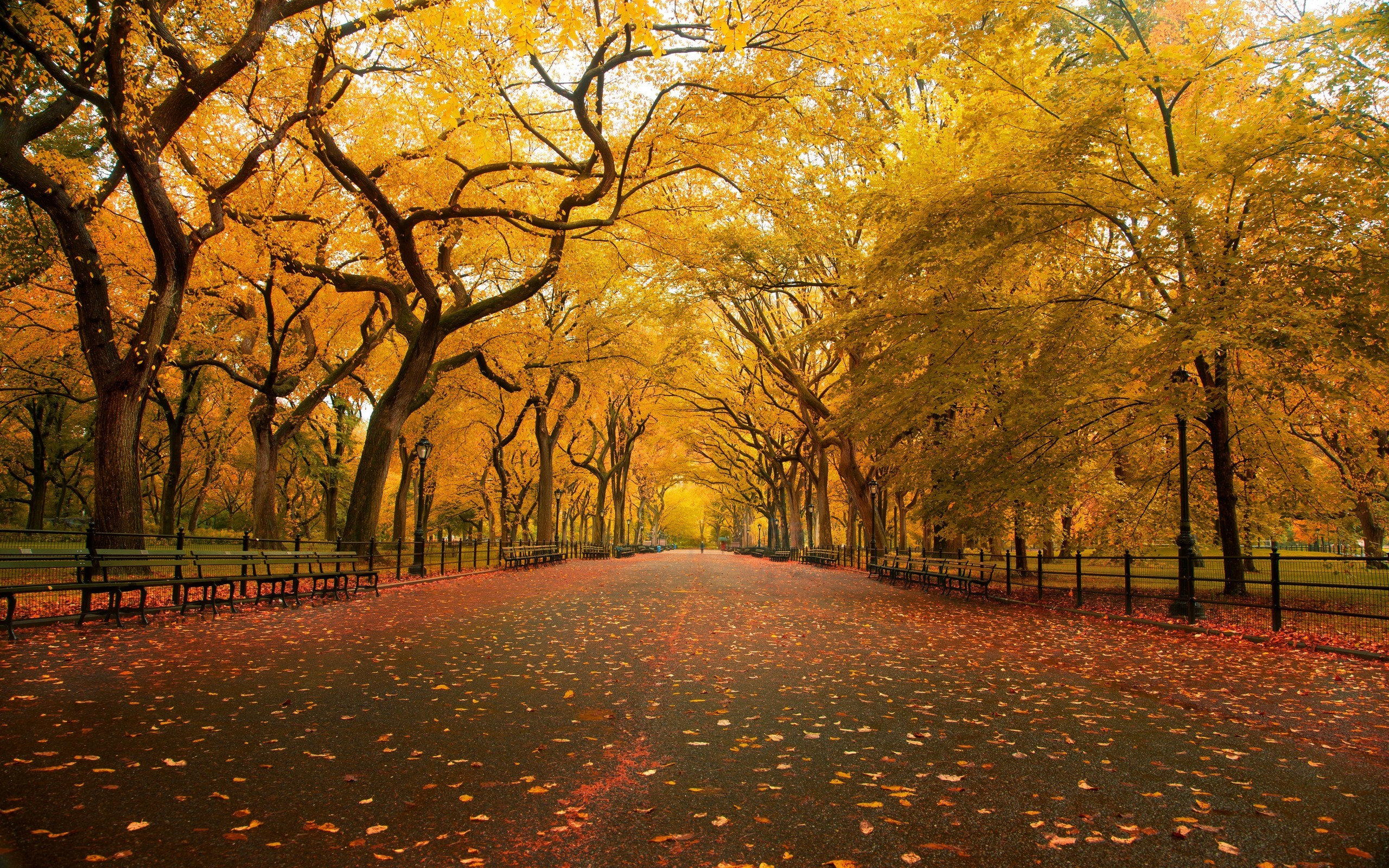 Central Park The Mall Fall Wallpaper 2560x1600 3527