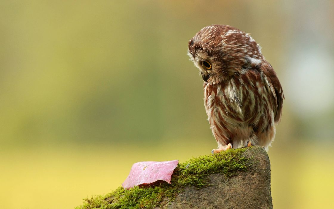 Little owl and leaf wallpaper