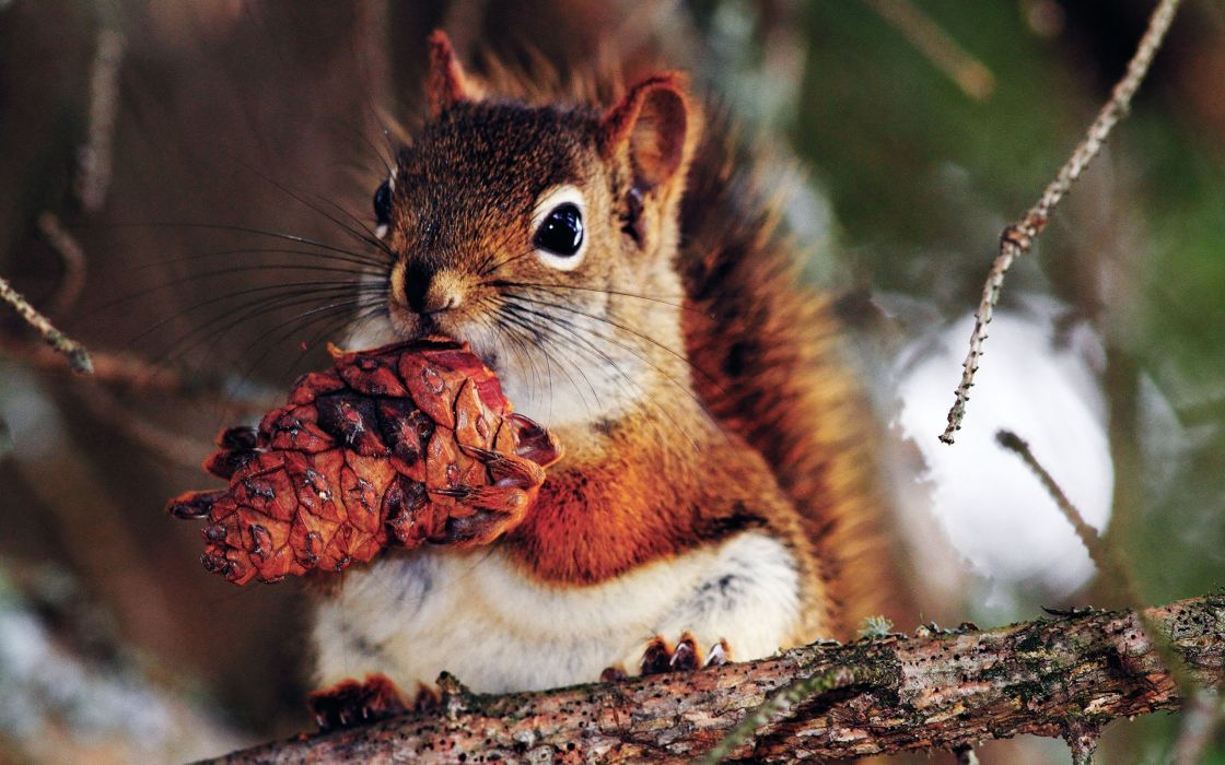 Good food for squirrel wallpaper