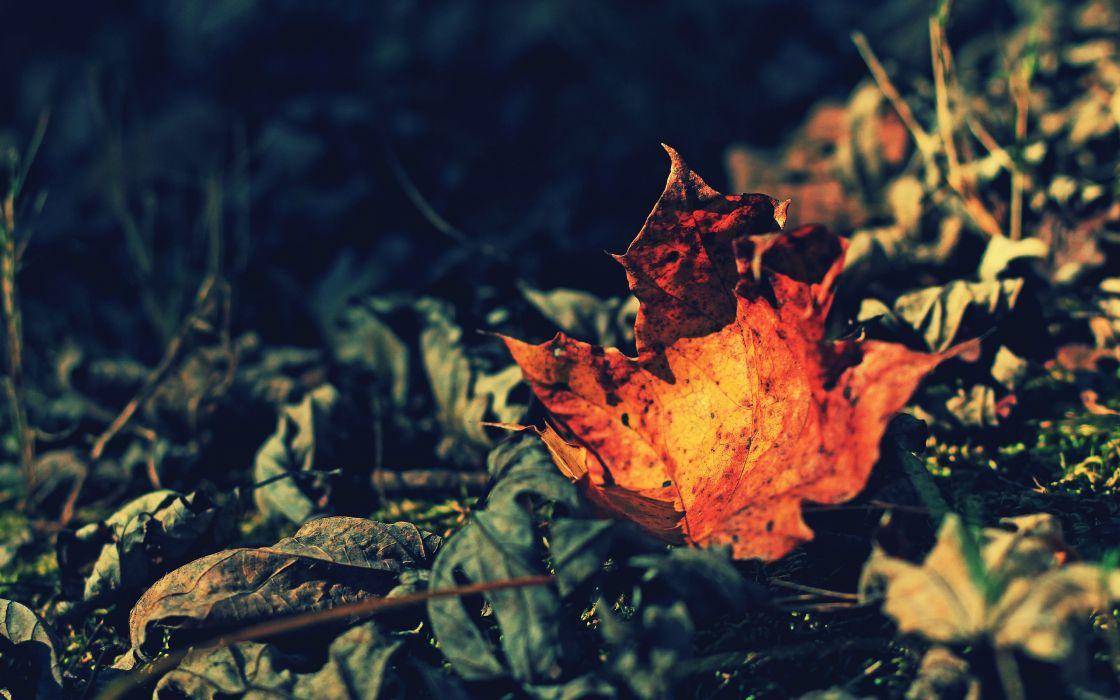 Orange leaf wallpaper