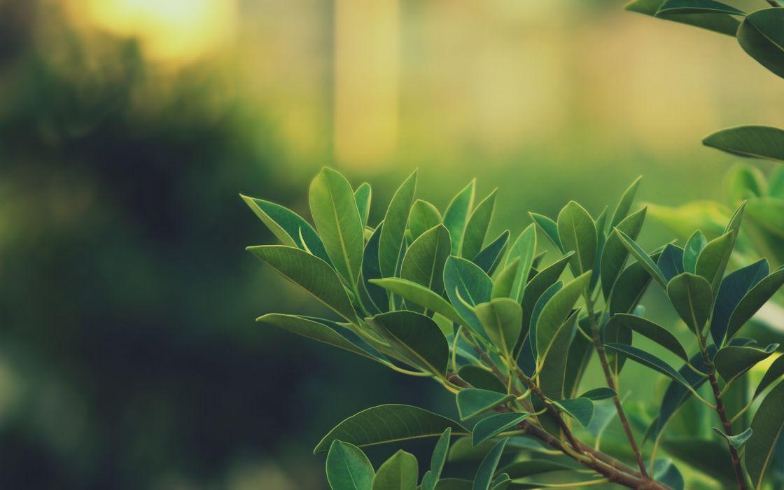 Leaves plant depth of field wallpaper