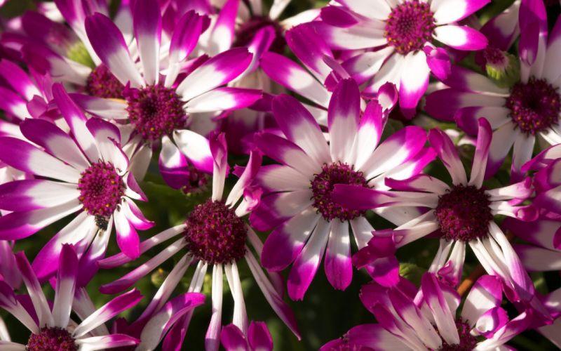 Beautiful purple flowers wallpaper