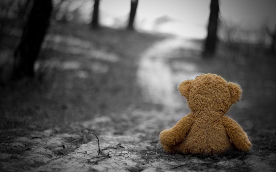Teddy bear in the wood wallpaper