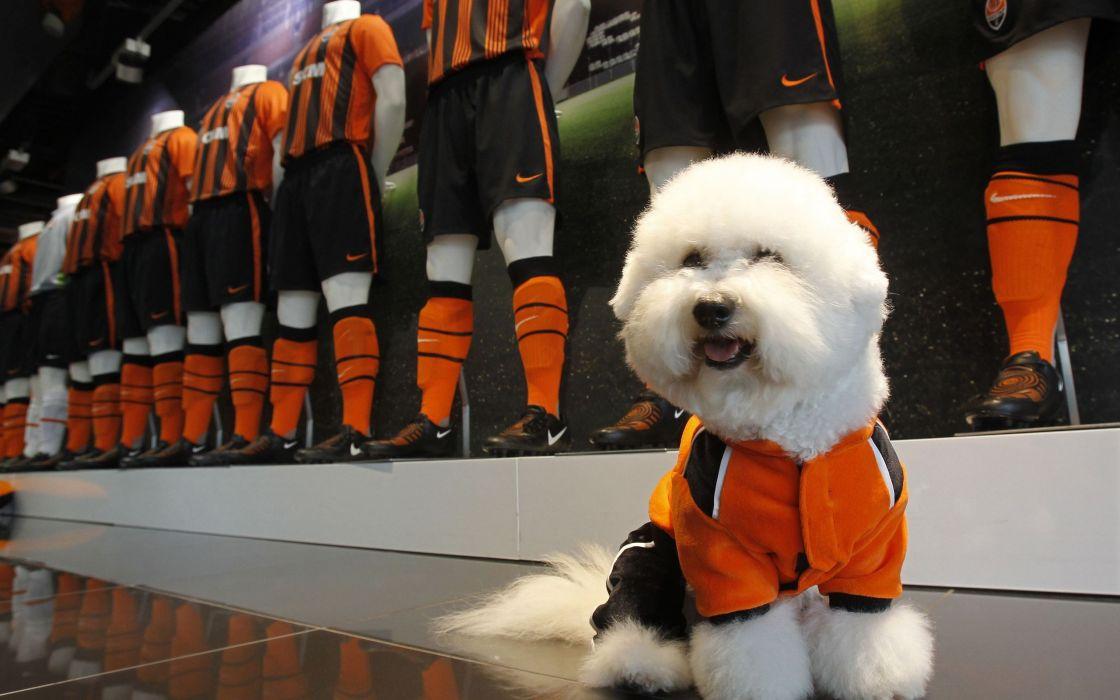 White dog mascot wallpaper