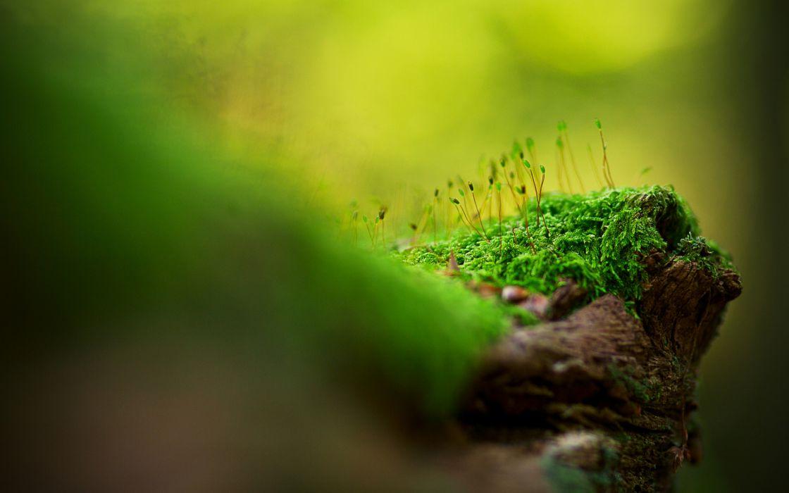 Beautiful tree moss wallpaper